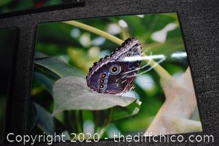 4 Framed Butterfly Pictures