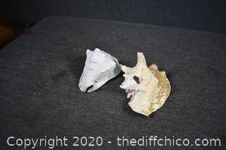 2 Sea Shells