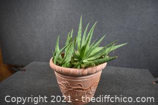 Alava Plant