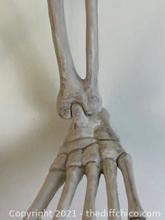 "Lifesize 50"" Tall Hanging Gorilla Skeleton XL Halloween Decorative Prop"