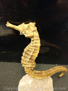 "Preserved Seahorse - 5"" Tall"