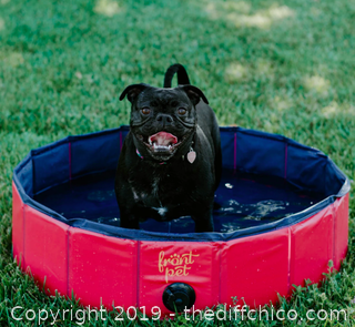 Frontpet Folding Dog Pool with Drain Plug - Small (J89)